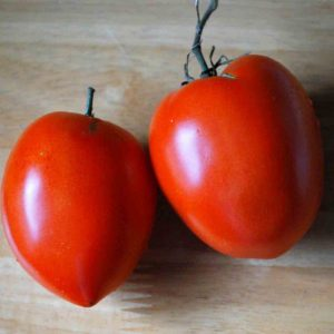 Breast of Venus Tomato (Téton de Vénus)