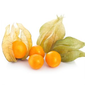 Golden Husk Ground Cherry