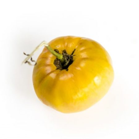 Tomate jaune Oncle Tom