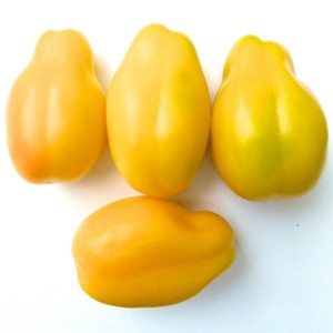 Tomate Yellow Bell