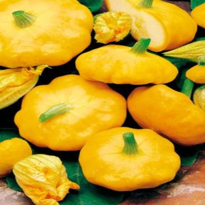 Golden Scalloppini Squash